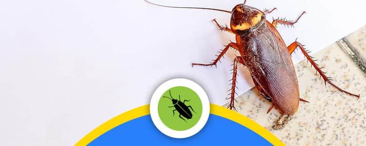 Cockroach Control Franklin